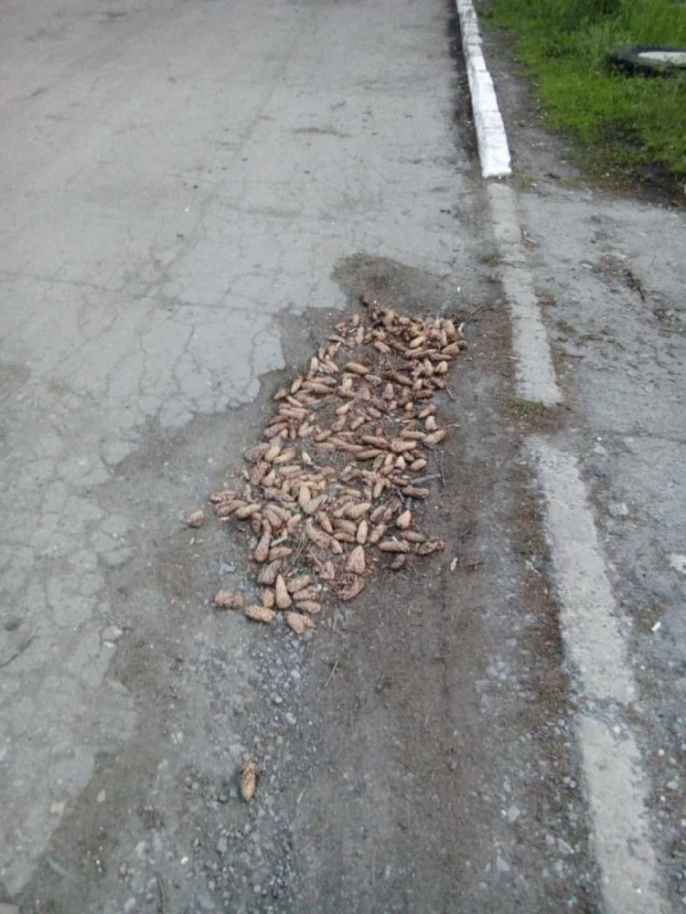 Головка ямы на дорогах засыпают шишками